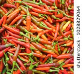 small red hot chili peppers | Shutterstock . vector #1028829064
