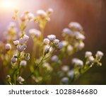 meadow daisies flowers blooming ... | Shutterstock . vector #1028846680