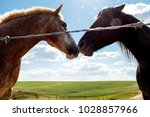 two horses nuzzle in the hot... | Shutterstock . vector #1028857966