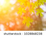 maple backlight image | Shutterstock . vector #1028868238