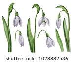 watercolor snowdrops  hand...   Shutterstock . vector #1028882536