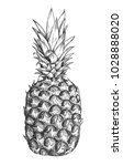 Sketch Ink Vintage Pineapple...