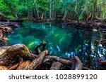 tha pom mangrove forest ... | Shutterstock . vector #1028899120