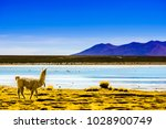 view on lagoon pastos grandes... | Shutterstock . vector #1028900749