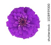 purple flower isolated on white ... | Shutterstock . vector #1028959300