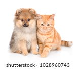 Stock photo spitz puppy and cat sitting together isolated on white background 1028960743