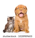 Stock photo happy puppy and kitten sitting together isolated on white background 1028989603