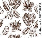 vector cola tree illustration.... | Shutterstock .eps vector #1029007330