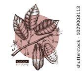 vector cocoa beans  leaves ... | Shutterstock .eps vector #1029008113