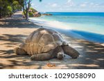 Stock photo seychelles giant tortoise 1029058090