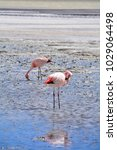 Small photo of Flamingoes, Altiplano Plateau, Bolivia