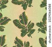 seamless texture ficus elastica ... | Shutterstock .eps vector #1029066088