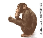 A Monkey With A Pensive Look...