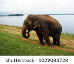 wild elephant waiting for food | Shutterstock . vector #1029083728