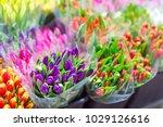 lot of multicolored tulips... | Shutterstock . vector #1029126616