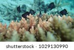 fish juveniles on coral reef at ...   Shutterstock . vector #1029130990