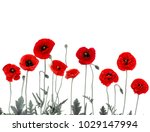 Flowers Red Poppies  Papaver...
