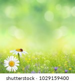 green summer nature background... | Shutterstock . vector #1029159400
