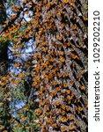 monarch butterfly biosphere... | Shutterstock . vector #1029202210
