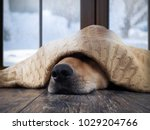 the dog freezes. funny dog... | Shutterstock . vector #1029204766