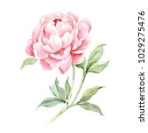 watercolor illustration of a... | Shutterstock . vector #1029275476