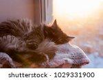 The Cat Sleeps On The Window ...