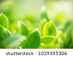 closeup nature view of green... | Shutterstock . vector #1029355306