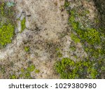 wet the surface of the stone... | Shutterstock . vector #1029380980