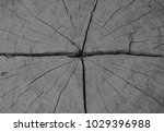 tree ring shows many things... | Shutterstock . vector #1029396988