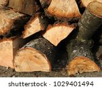 stack of cut logs | Shutterstock . vector #1029401494