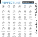 brain process thin line web... | Shutterstock . vector #1029424936