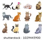 Stock vector vector funny and cute cartoon cat different breeds pet characters set 1029445900