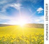 sun above sunflower field. copy ... | Shutterstock . vector #1029451819