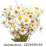 bouquet of large white daisies... | Shutterstock . vector #1029459154