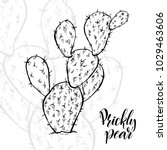 Hand Drawn Prickly Pear ...