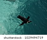 bathing cute penguin            ... | Shutterstock . vector #1029494719
