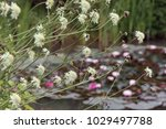summer  in the garden near the... | Shutterstock . vector #1029497788