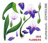 set of iris flowers  berries ... | Shutterstock .eps vector #1029501388
