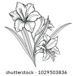 blooming lily flowers  ...   Shutterstock .eps vector #1029503836