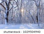 sunrise in forest. location ... | Shutterstock . vector #1029504940