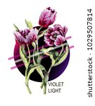 striped tulip in pink and...   Shutterstock .eps vector #1029507814