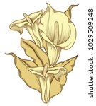 hand drawn blooming flowers....   Shutterstock .eps vector #1029509248