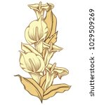 hand drawn blooming callas...   Shutterstock .eps vector #1029509269