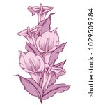 hand drawn blooming flowers.... | Shutterstock .eps vector #1029509284