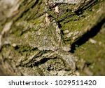 detail with focus in the center ... | Shutterstock . vector #1029511420