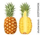 illustration of pineapple | Shutterstock .eps vector #1029534436