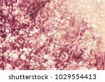 beautiful garden flowers | Shutterstock . vector #1029554413