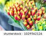 beautiful multicolored flower... | Shutterstock . vector #1029562126