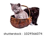 two cute kittens are playing in ... | Shutterstock . vector #1029566074