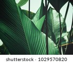 beautiful of green tropical... | Shutterstock . vector #1029570820